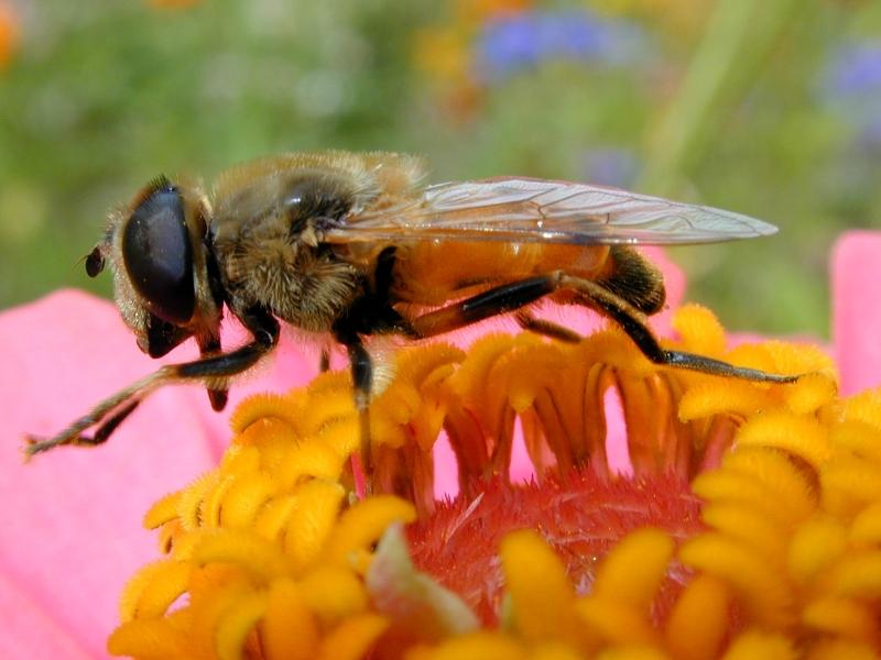 abeille_00