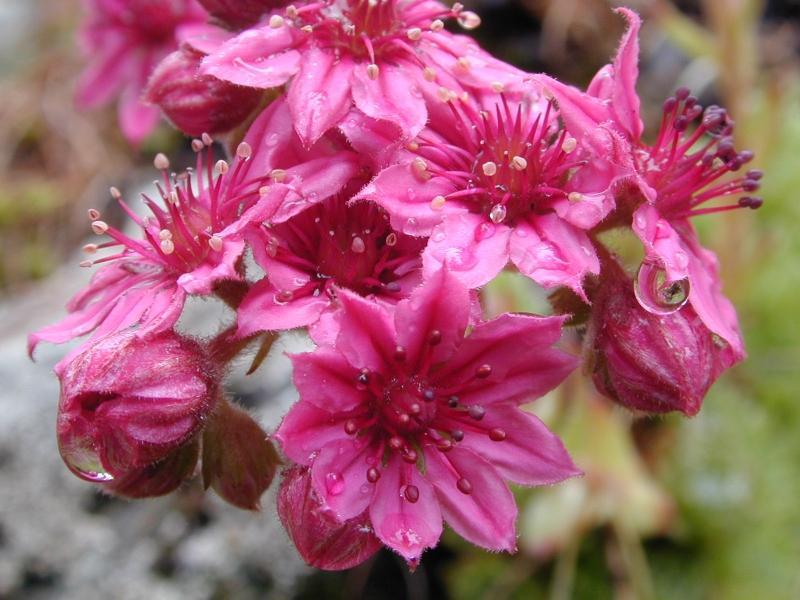 fleurs_004