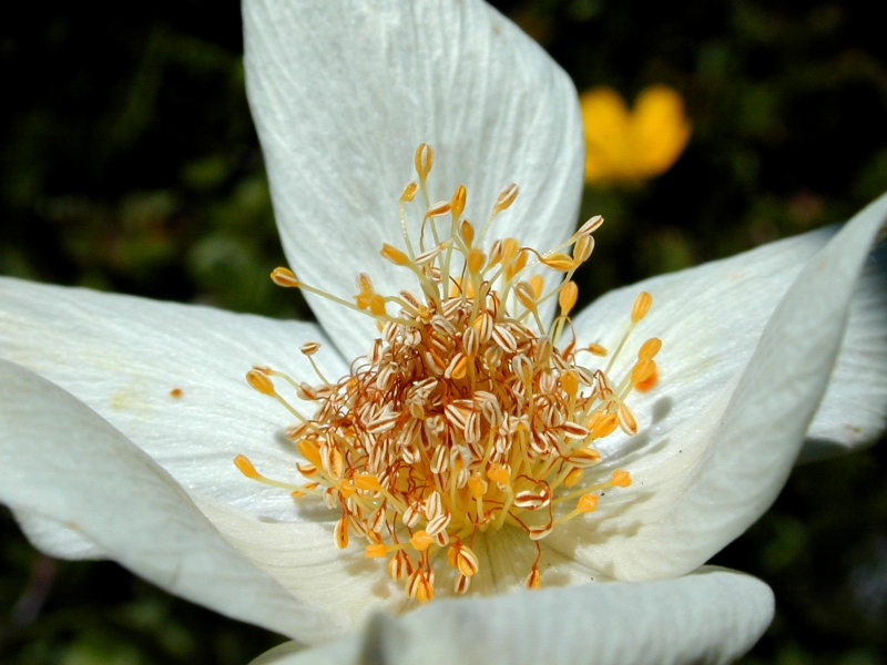 Au coeur de la fleuressence florale kyn siologie ancrage - Fleur au coeur noir ...